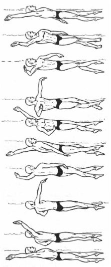 how to swim front crawl properly